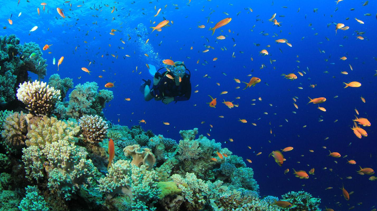 scuba_diving_koh-tao
