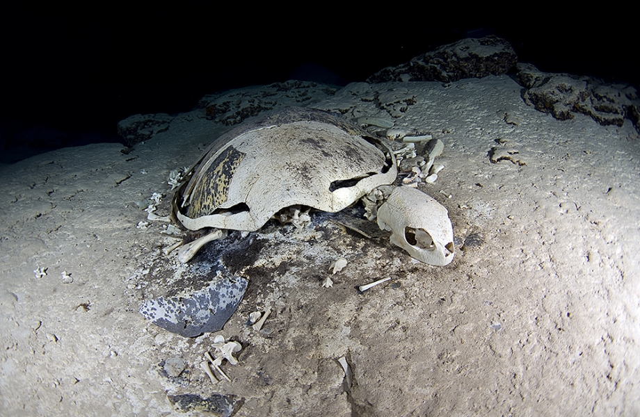 Remains of a turtle in a turtle tomb at Sipandan