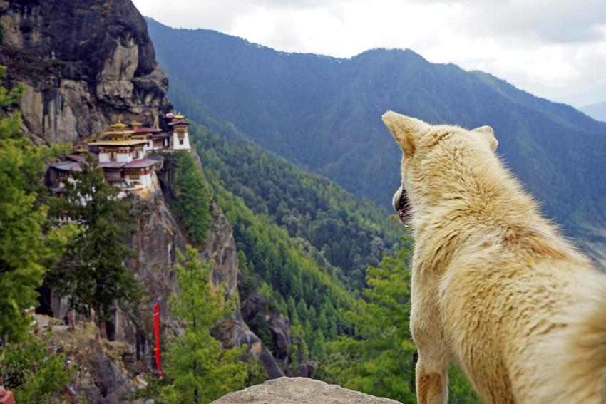 Bhutan-TigersNest-DogView1