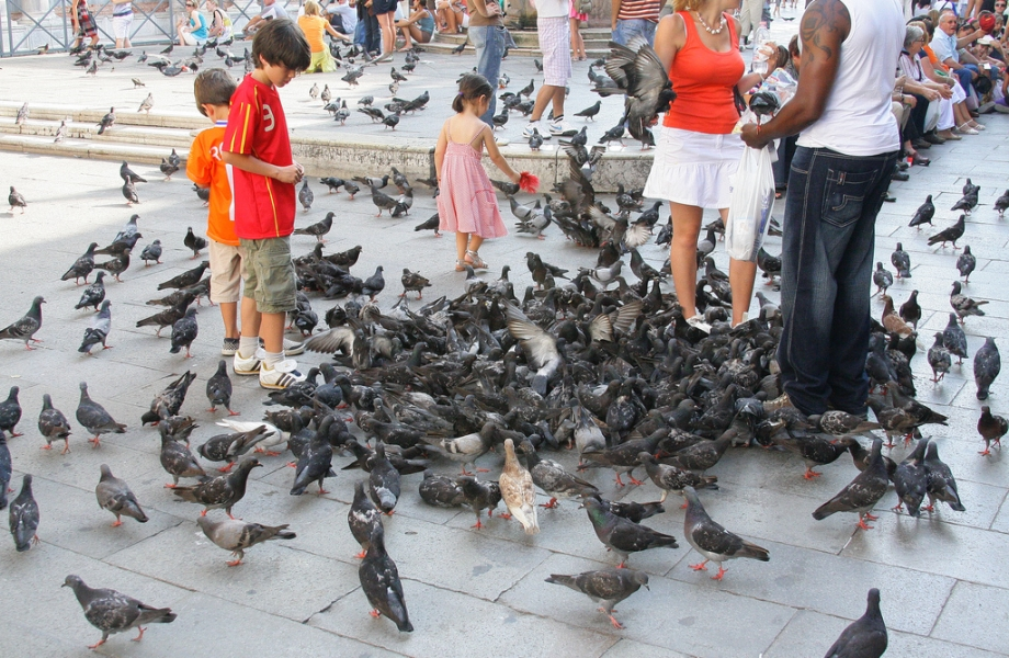 Illegal to feed pigeons, Venice