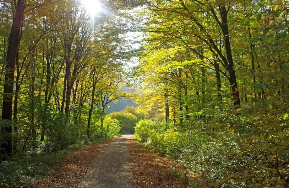 Vienna_Woods-autumn2013-web
