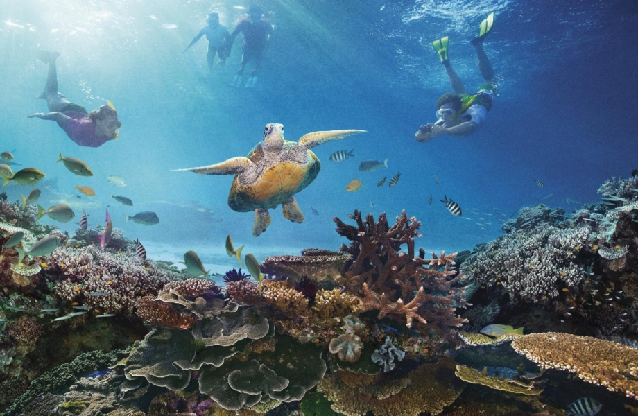 Deep within - The Great Barrier Reef