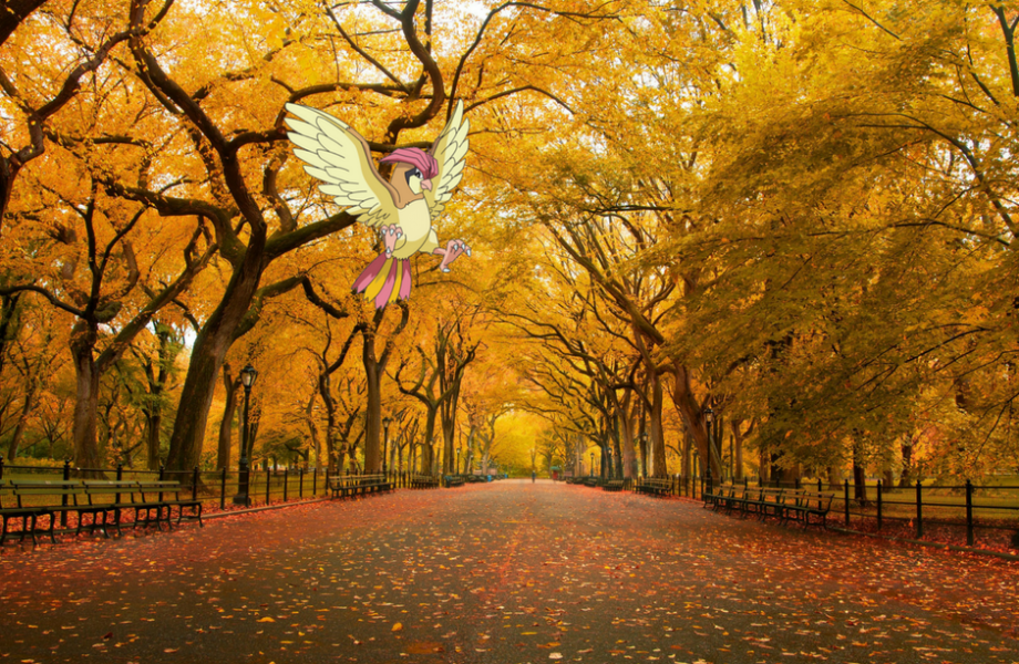 Pidgeotto in Central Park at USA