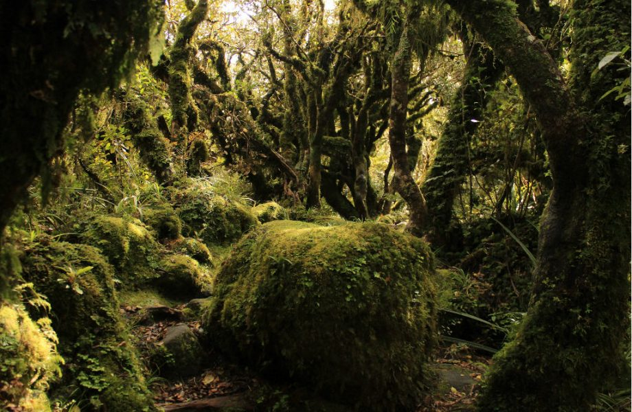 Filming location of Fangorn forest