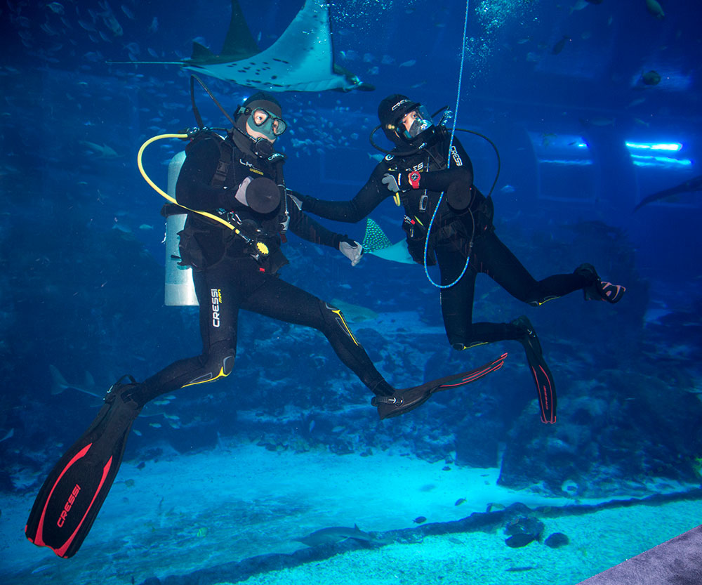 Divers at SEA Aquarium Singapore