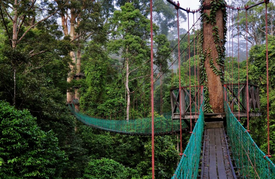 Canopy walk along the Darum valley