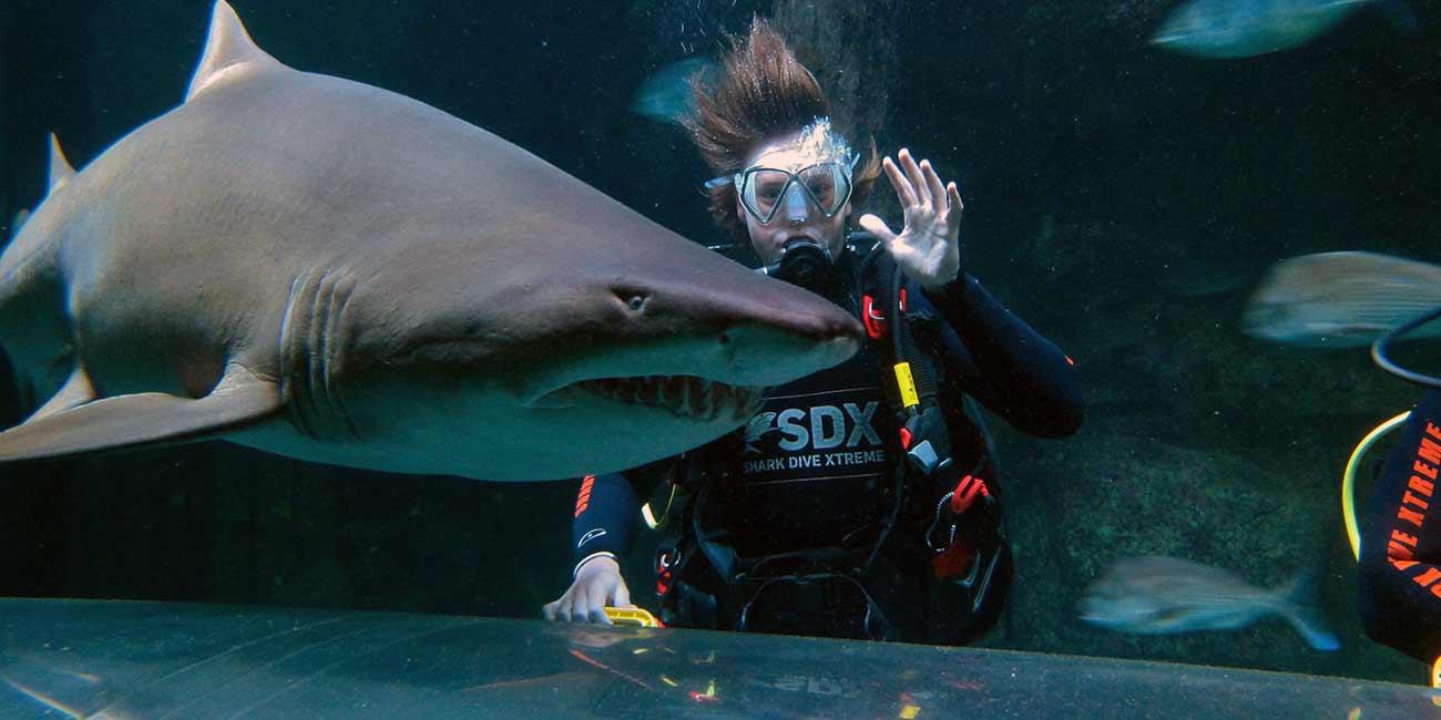 kt-sdx-shark-experiences
