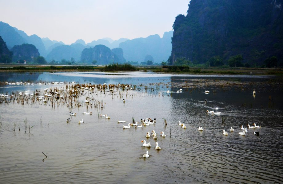 Rural countryside of Tam Coc