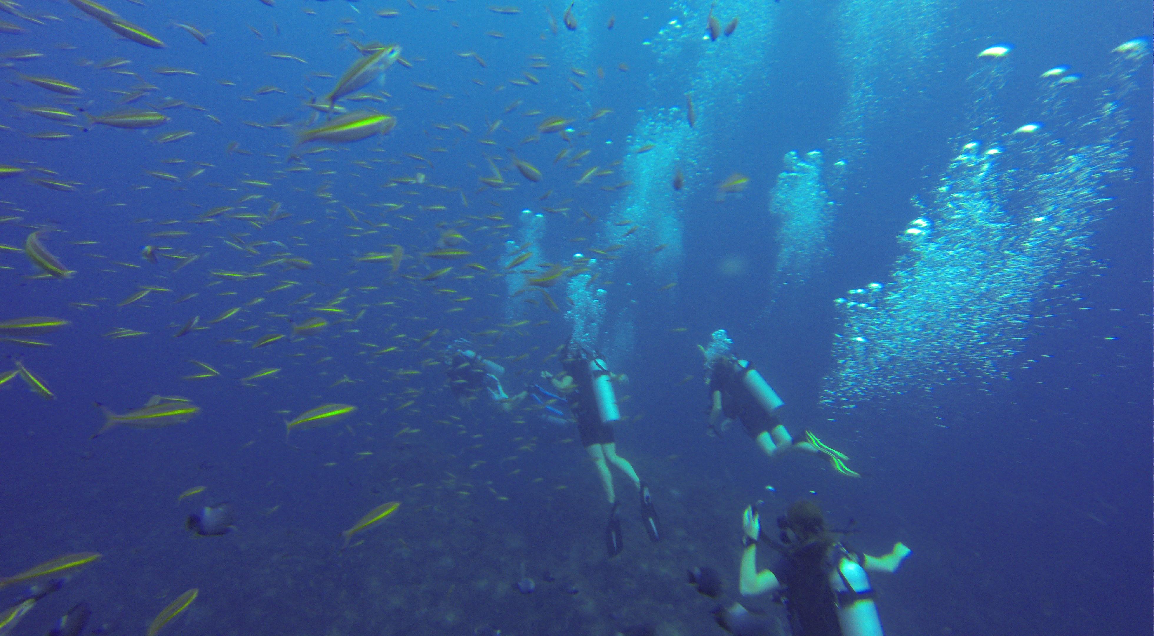 underwater-koh-tao