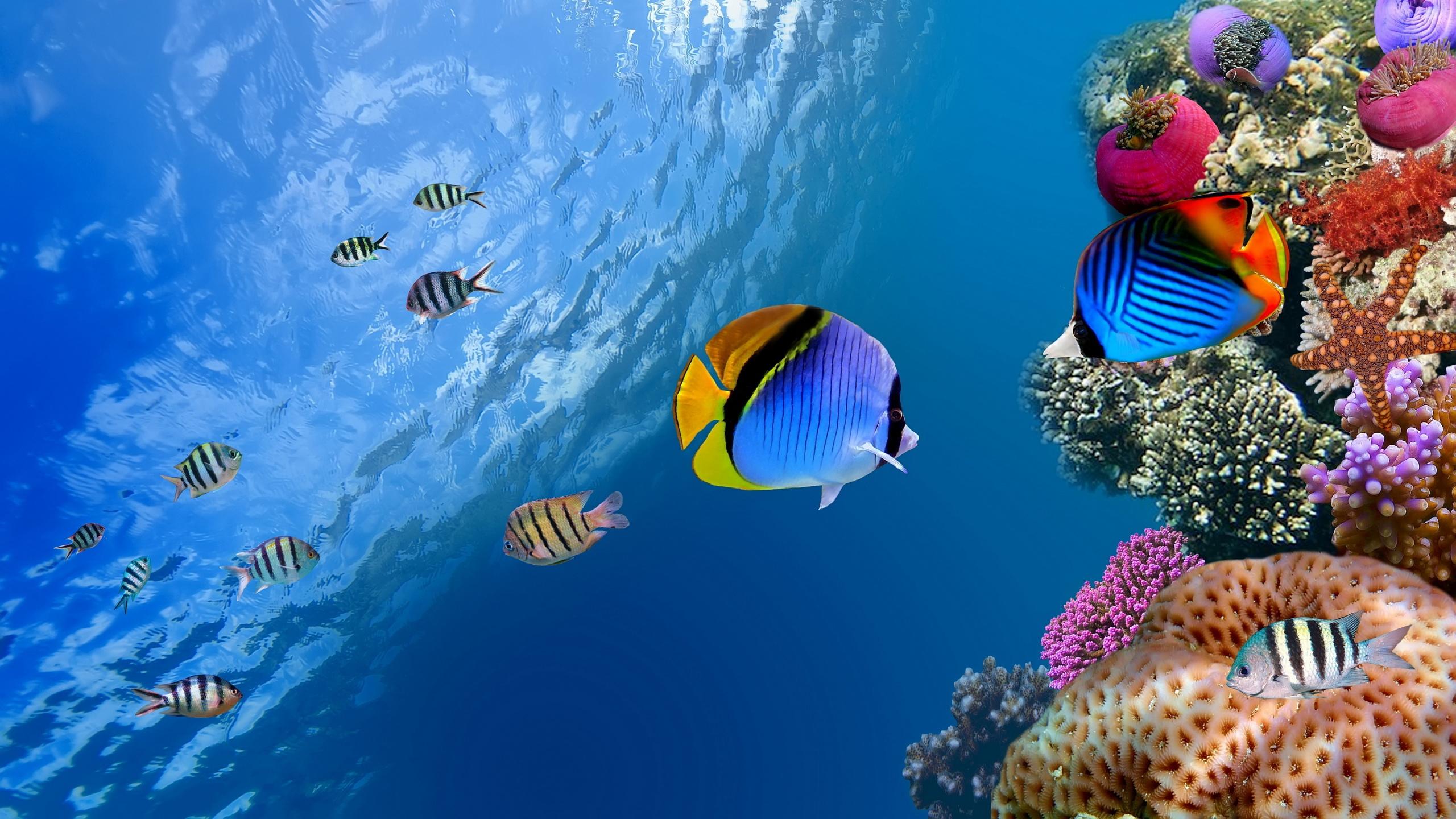 underwater-coral-fish-2560x1440