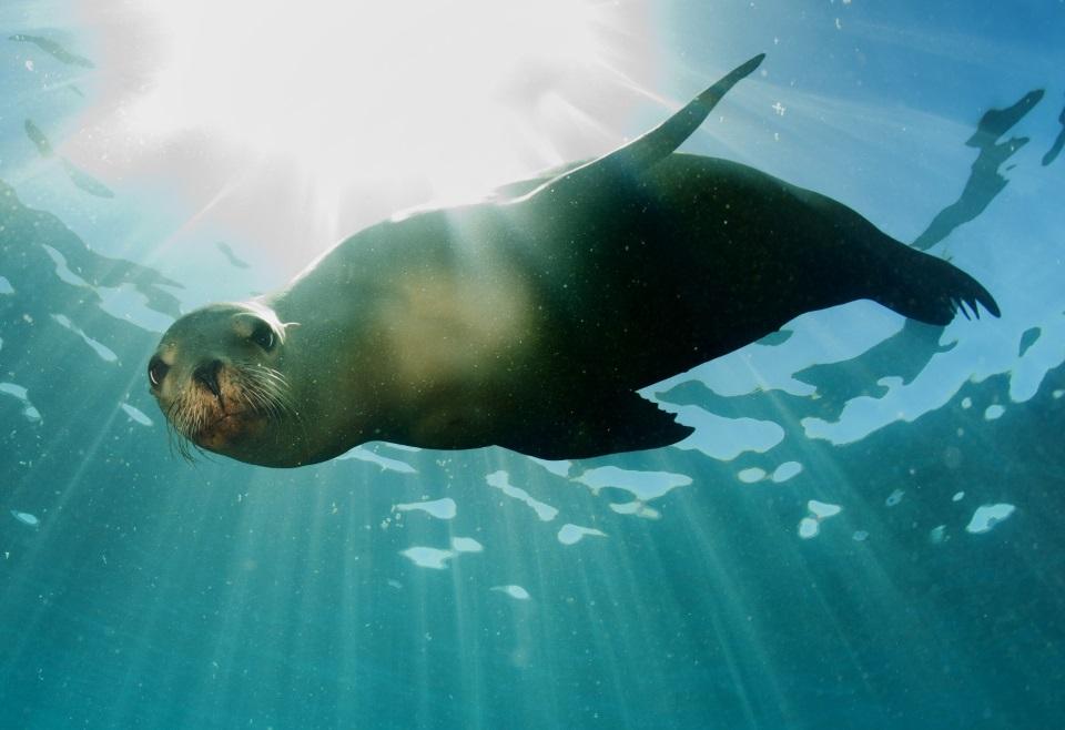 Swim with seals at Kaikoura