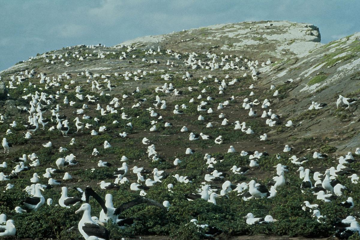Dunedin- walk among albatrosses in your honeymoon destination in New Zealand