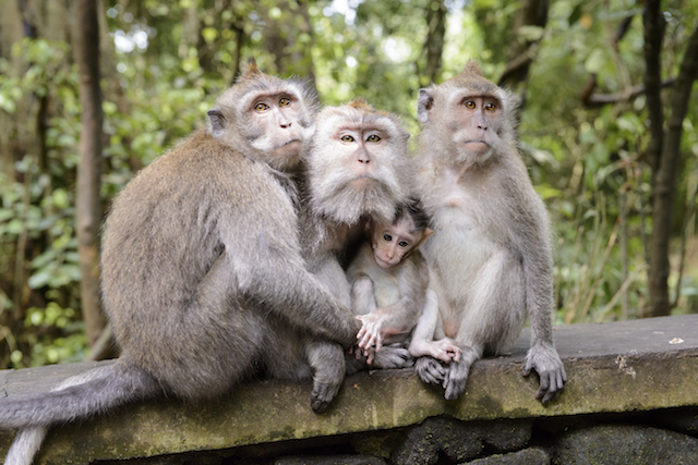 Sacred Monkey Forest Tour - A Bali Tourist Attraction