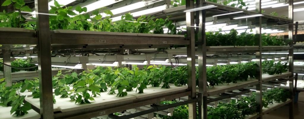 Dubai-Vertical-Farm