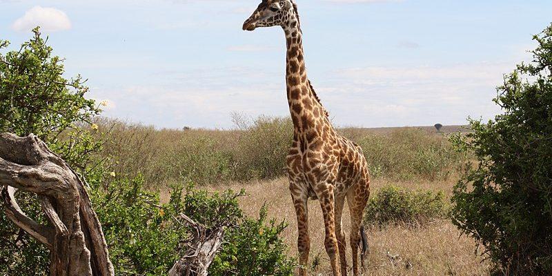 Safari Park in Dubai