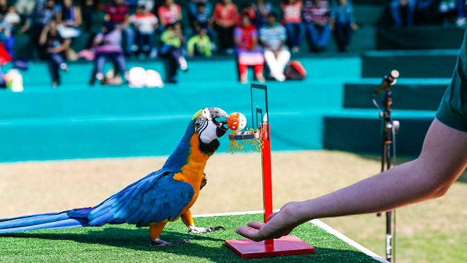 parrot show dubai