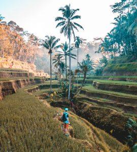 Terraced rice fields Bali