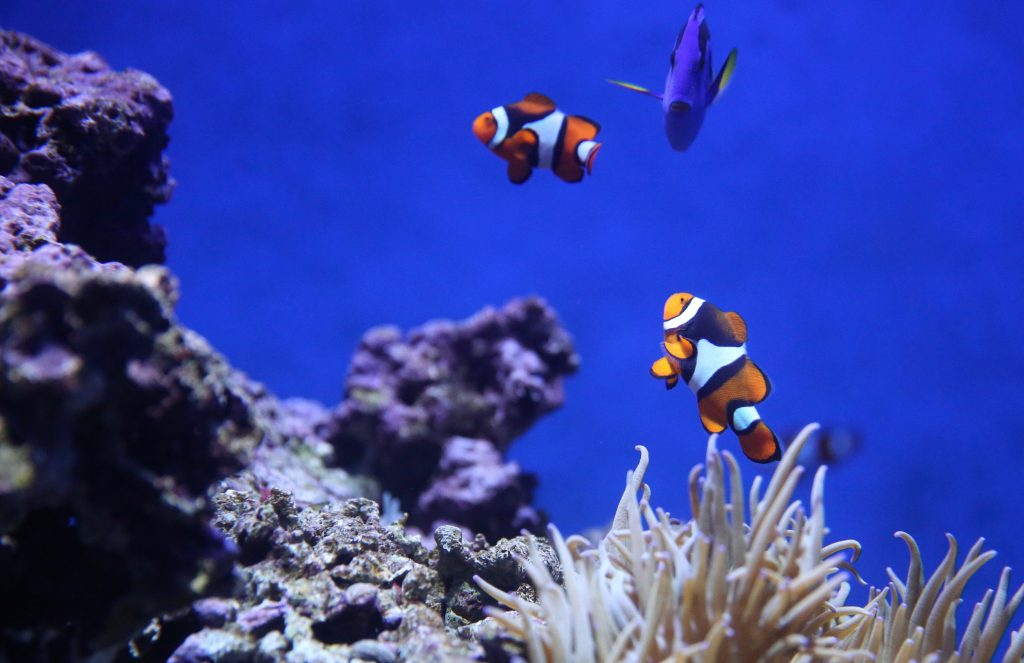Marine life in the aquarium in Sentosa ,Singapore which can be experience by Snorkelling
