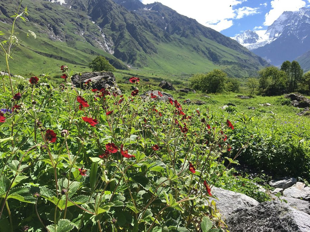 A view inside the valley of flowers national park