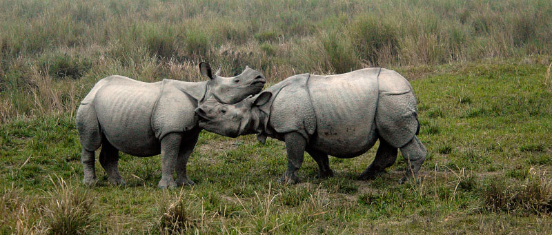 . Kaziranga National Park