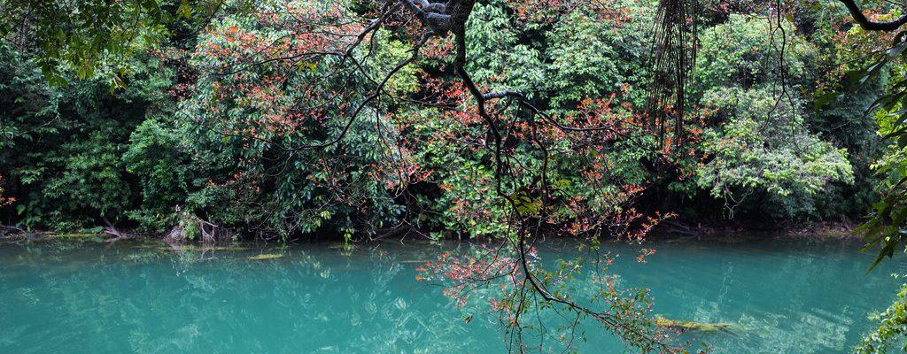 Waterway at MacRitchie Reservoir Singapore