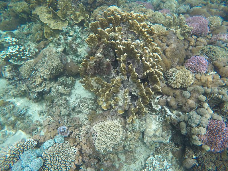 Snorkeling in Lord Howe, Australia
