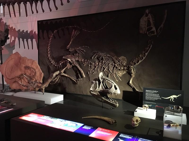 Dinosaur Fossils and Casts, Australian Museum