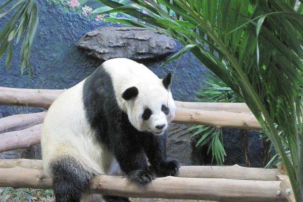 Chiang Mai Zoo In Chiang Mai