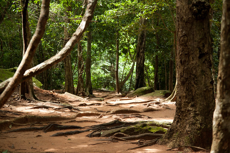 Trekking in Virachey National Park