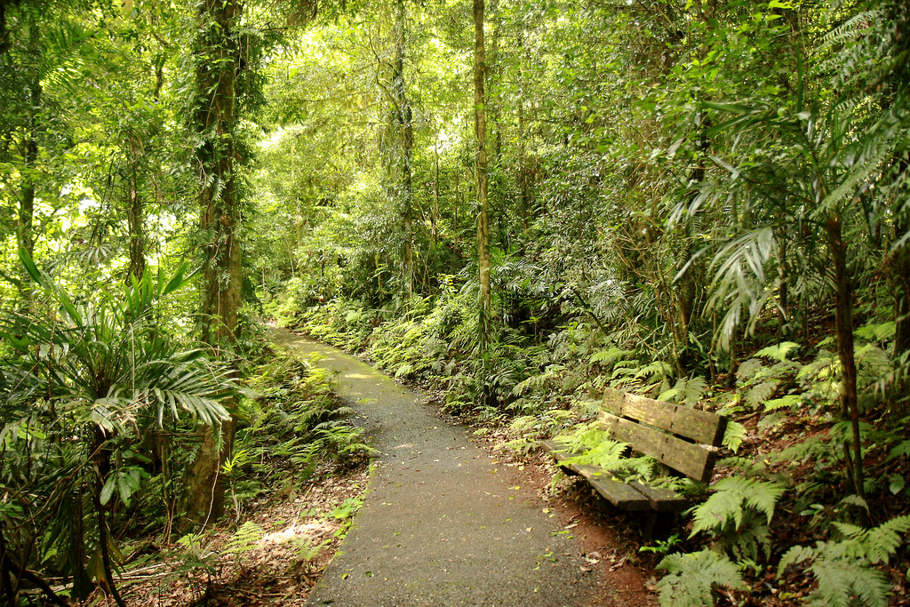 A walking path through Gondwana Rainforests