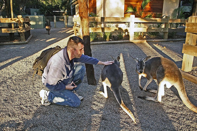 Kangaroo feeding at Featherdale Wildlife Park