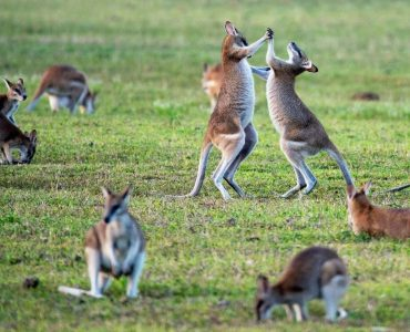 Australia in Winter