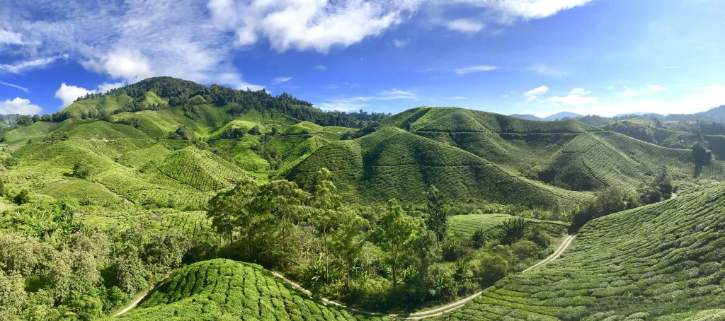 Cameron Highlands Boh Tea Plantation (Travel Guide to the Cameron Highlands)