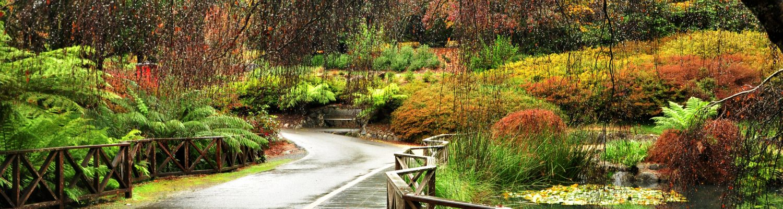 Autumn in Dandenong ranges