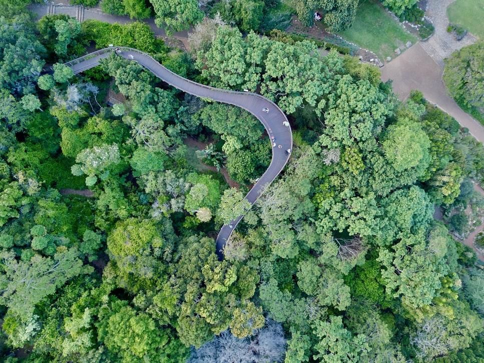 Top View of the Kirstenbosch Botanical Garden