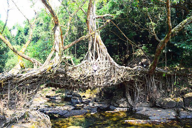 Mawlynnong's Living Root Bridge