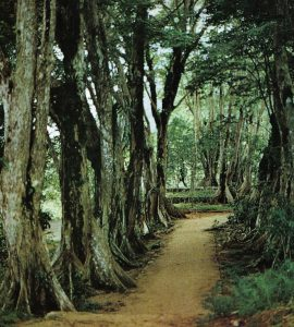 A picture of trees in Morne Seychellois Park