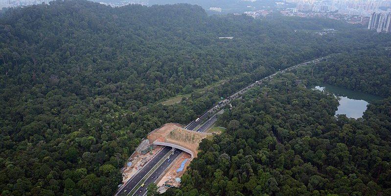 Singapore Wildlife