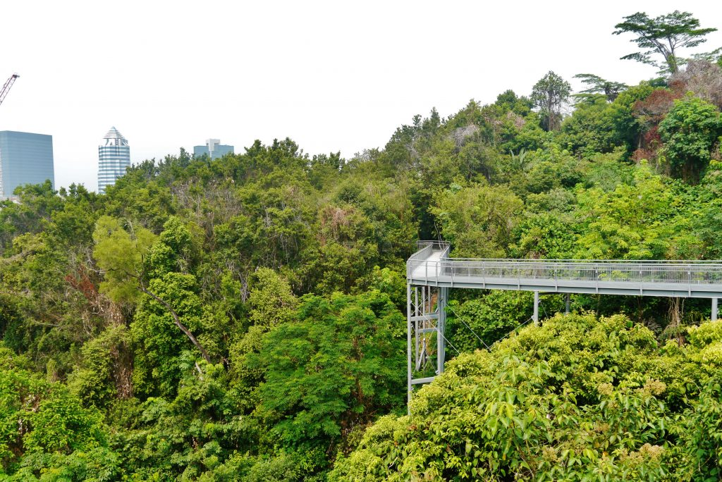 The hilltop walk at the Southern Ridges in Singapore