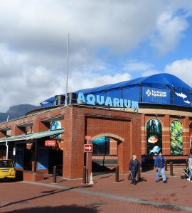 two oceans aquarium capetown