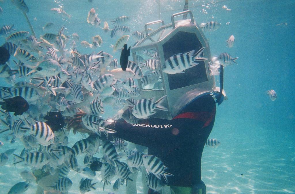 Exciting Underwater Sea Walk