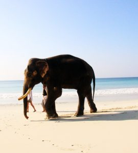 Amazing view of Radhanagar beach, Havelock Island