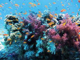 Coral reefs of Layang layang island