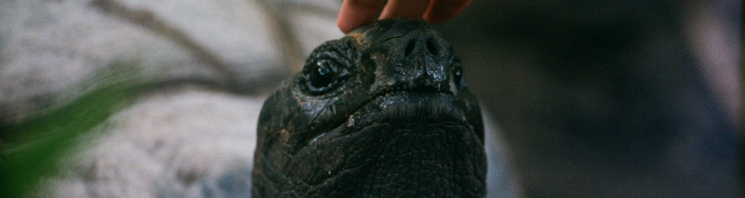 A picture of a hand touching a tortoise's head