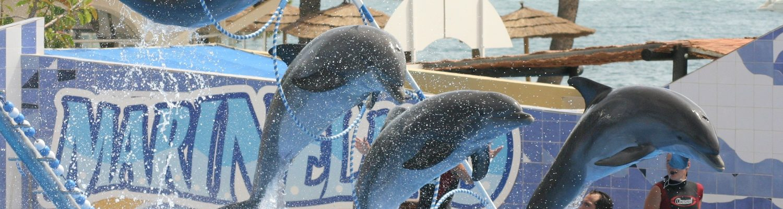 Dolphin show at dolphin island