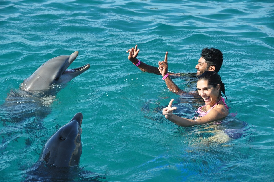 Swimming with Dolphins at the Dolphin Bay