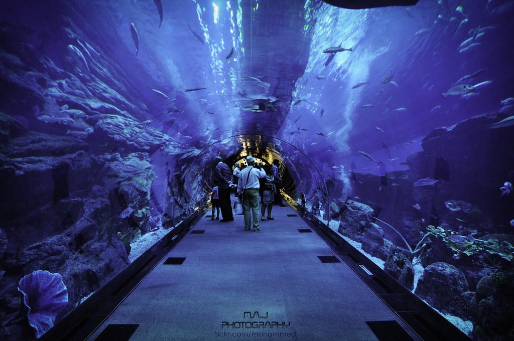 Dubai Aquarium And Underwater Zoo Get Up Close With Aquatic Life