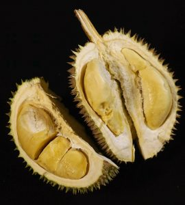 Healthy Durian Fruit