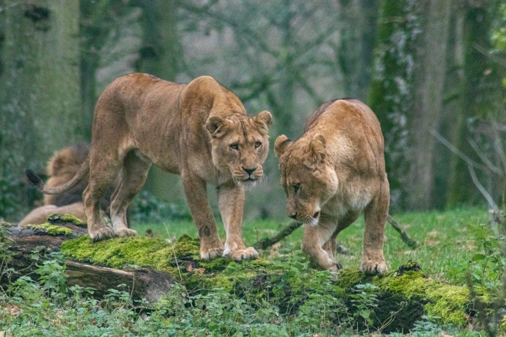 Dampa Wildlife Sanctuary in Mizoram