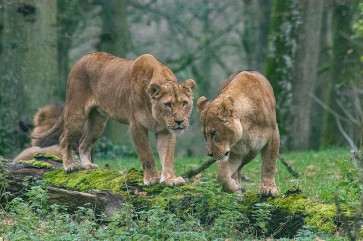 Mizoram Wildlife Sanctuary